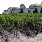 Château Mouton Rothschild, sanfte Hügel, die sich der Gironde zuneigen