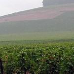 Corton und Corton Charlemagne, zwei berühmte, nicht erweiterbare Lagen im Burgund